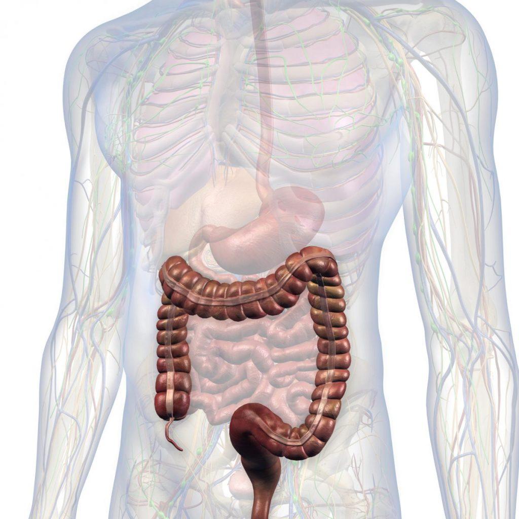 the appendix intestines