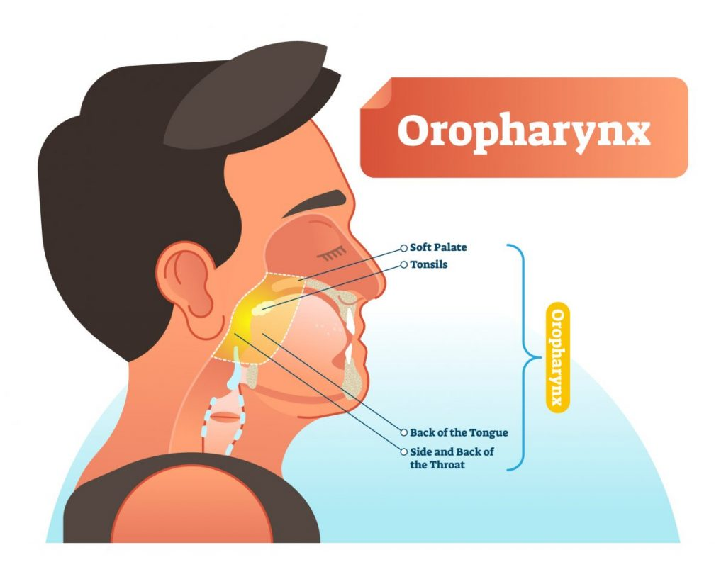 mouth The pharynx