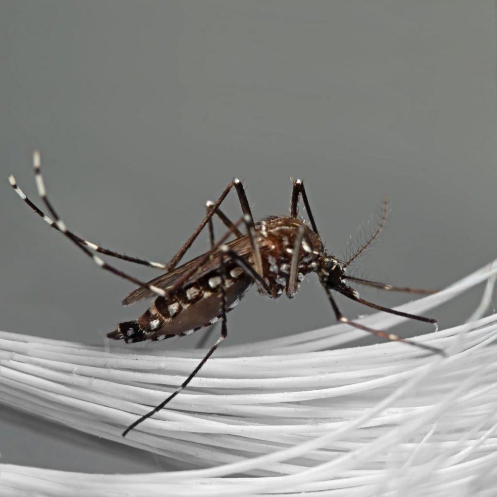 medication malaria
