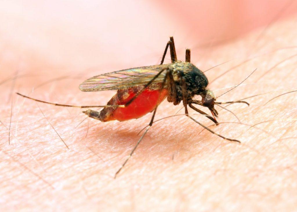 malaria Communicable diseases