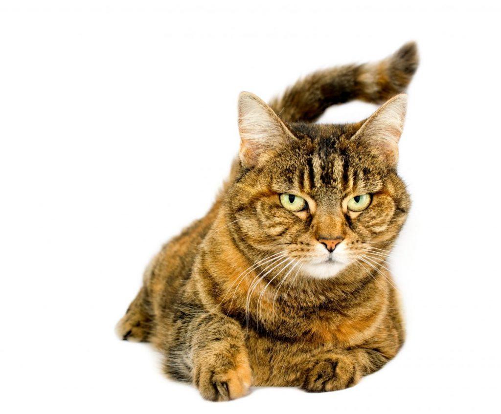 felines cat names