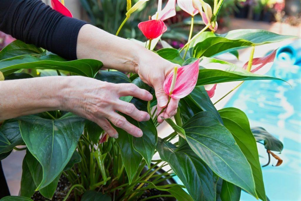 arthritis Chronic diseases
