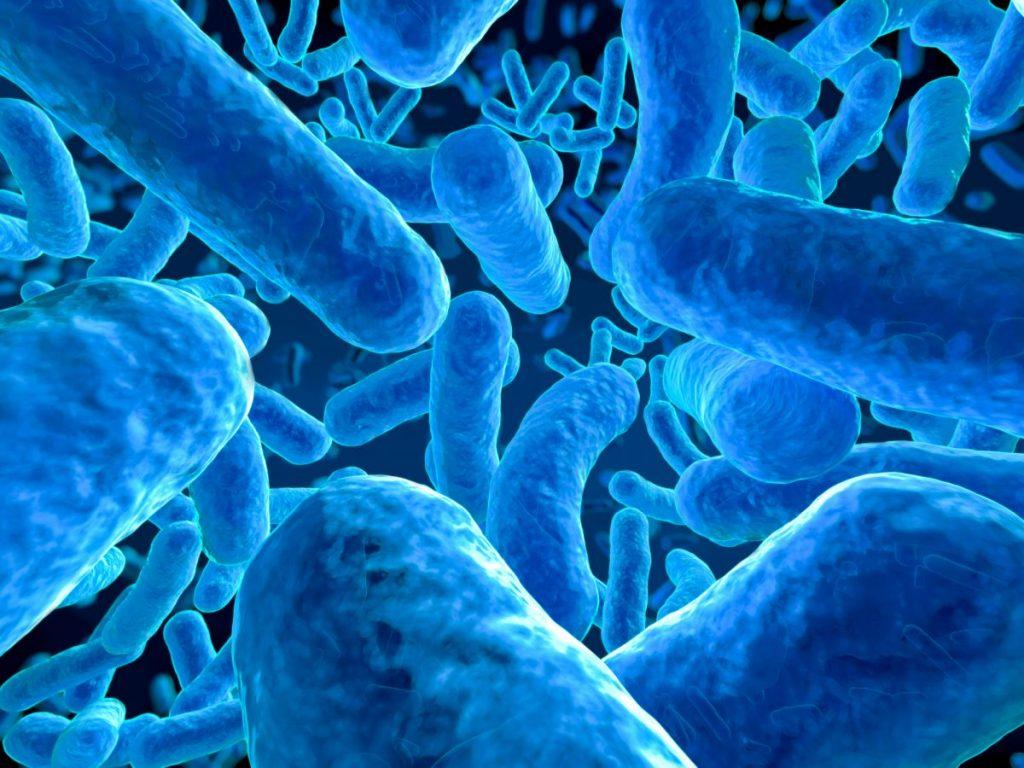 bacteria large intestine