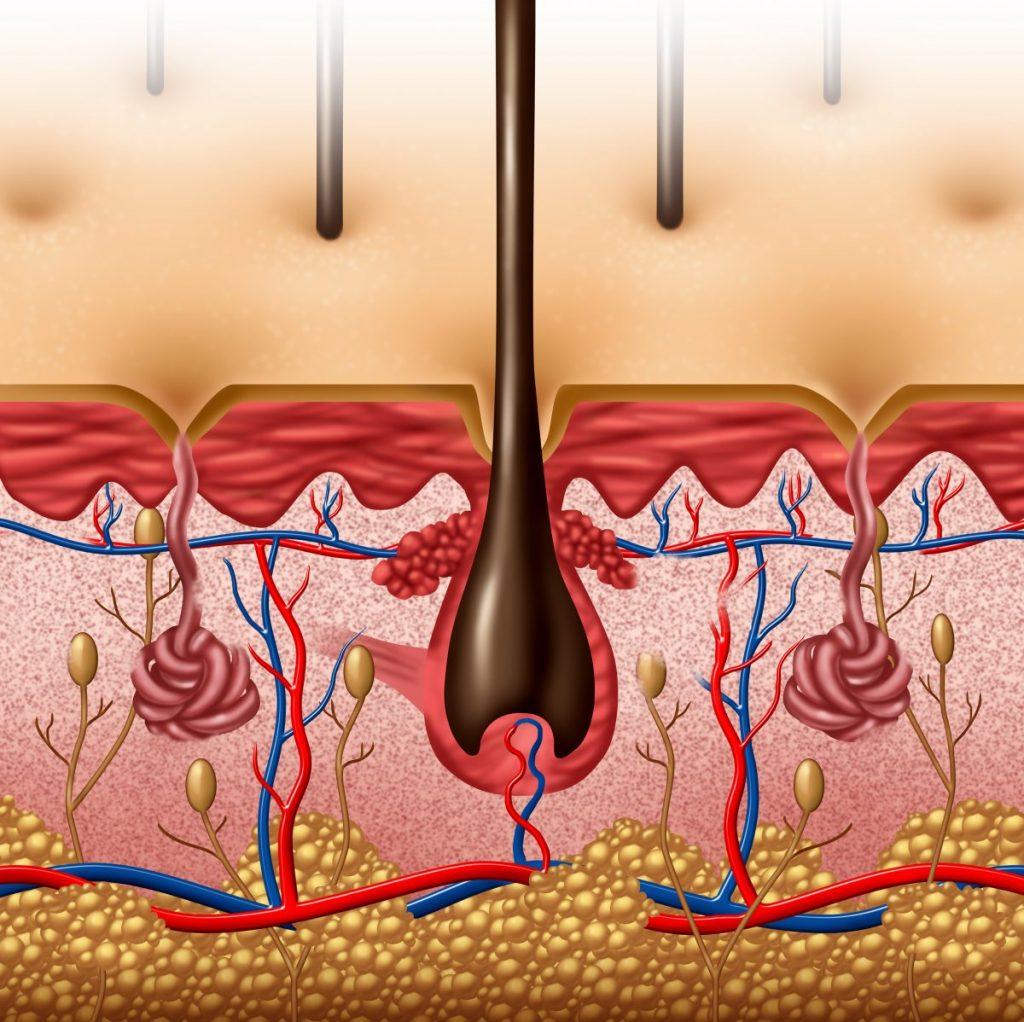 exocrine and endocrine