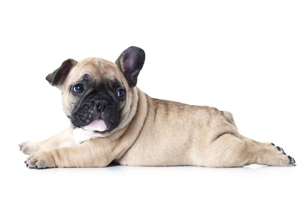 most loved popular dog breeds