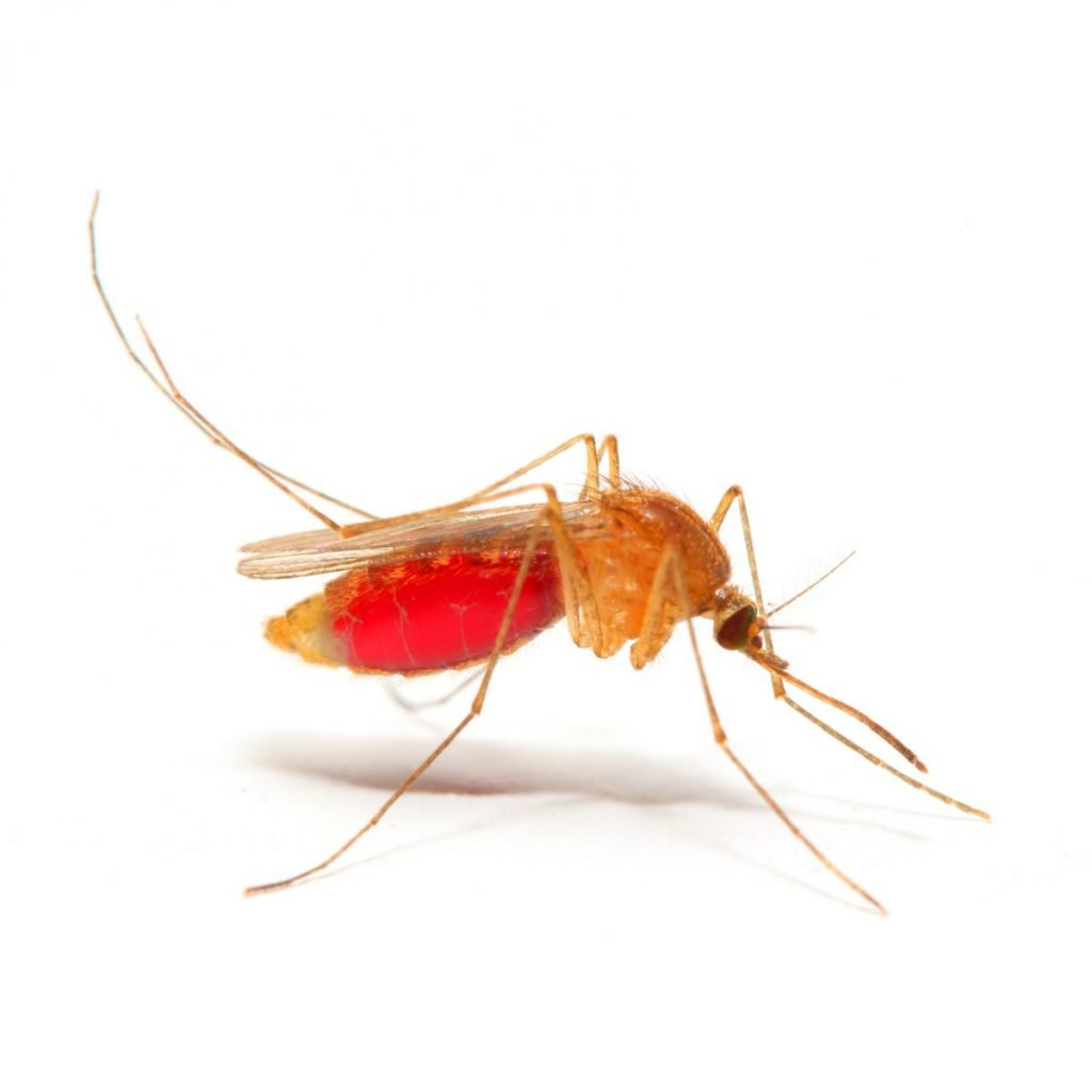 climate malaria