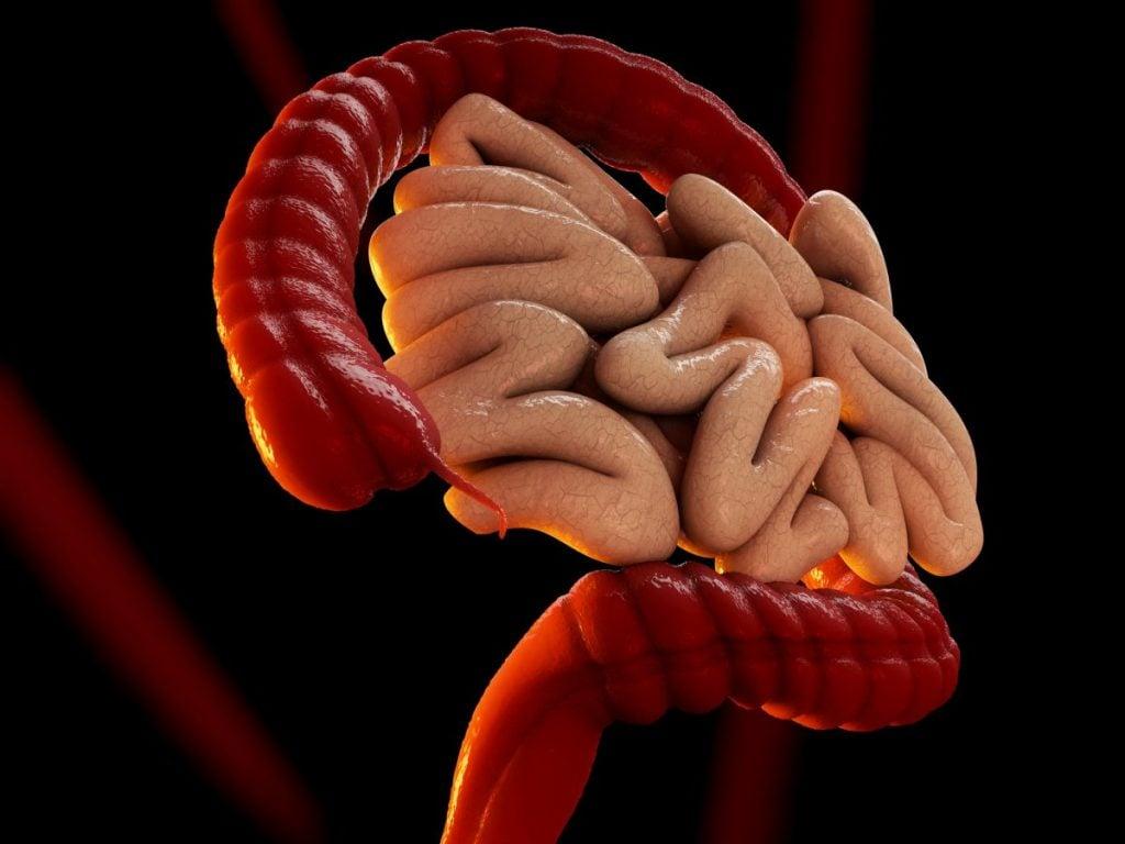 the appendix digestion