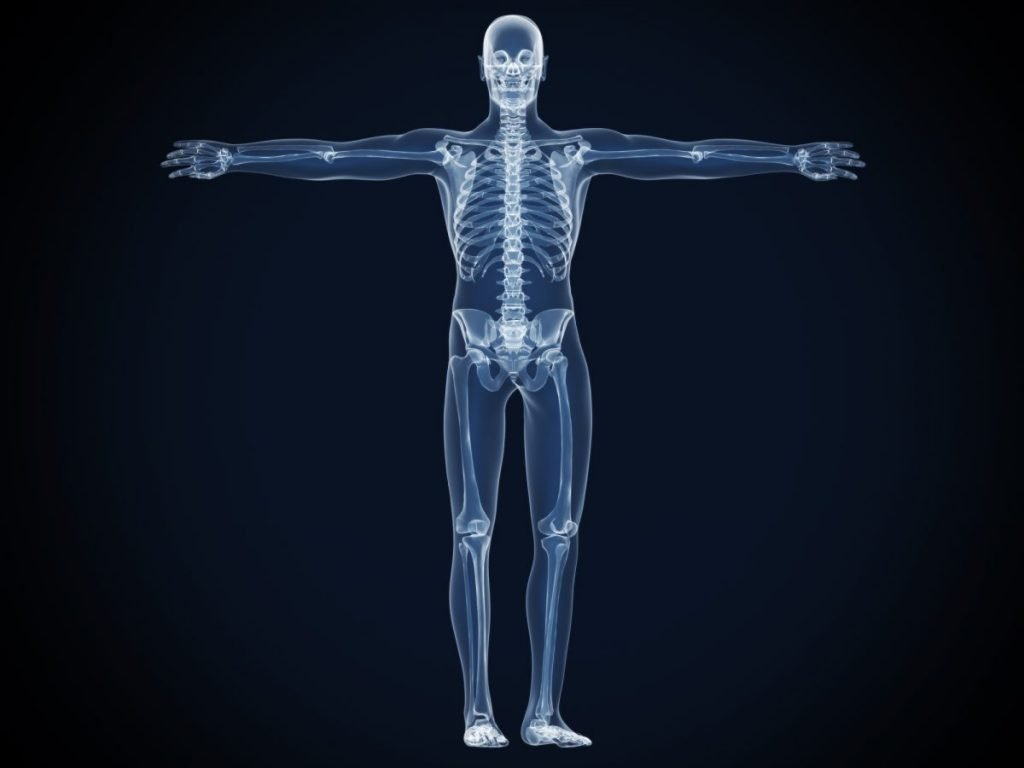 how many bones skeletal system