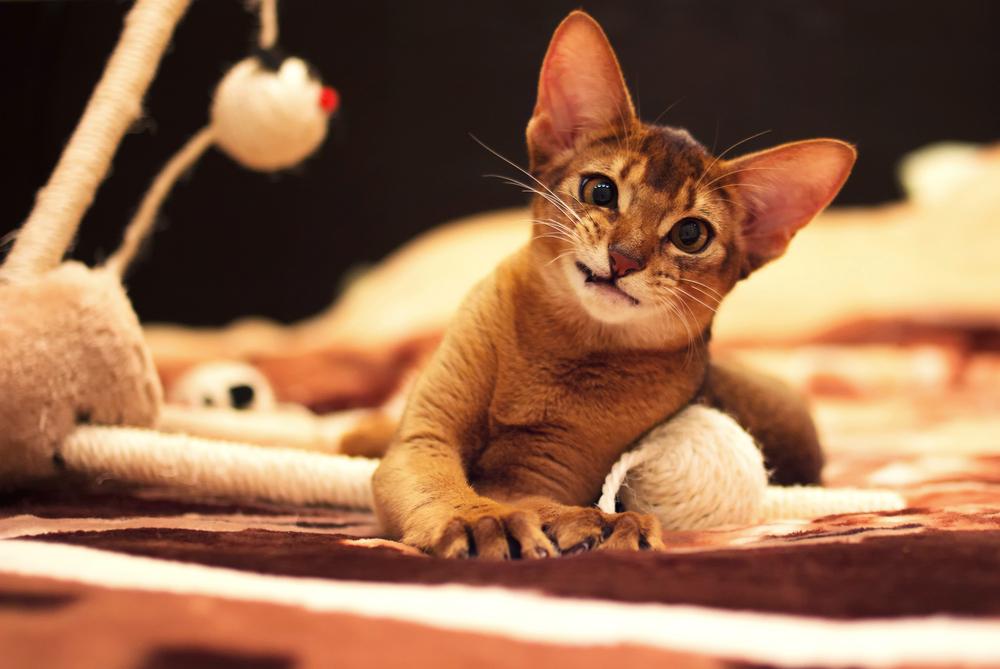 strange cat breeds
