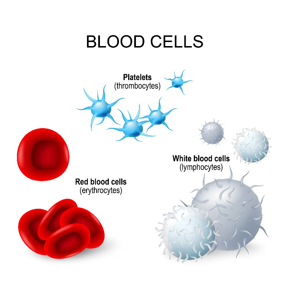 blood cells platelets