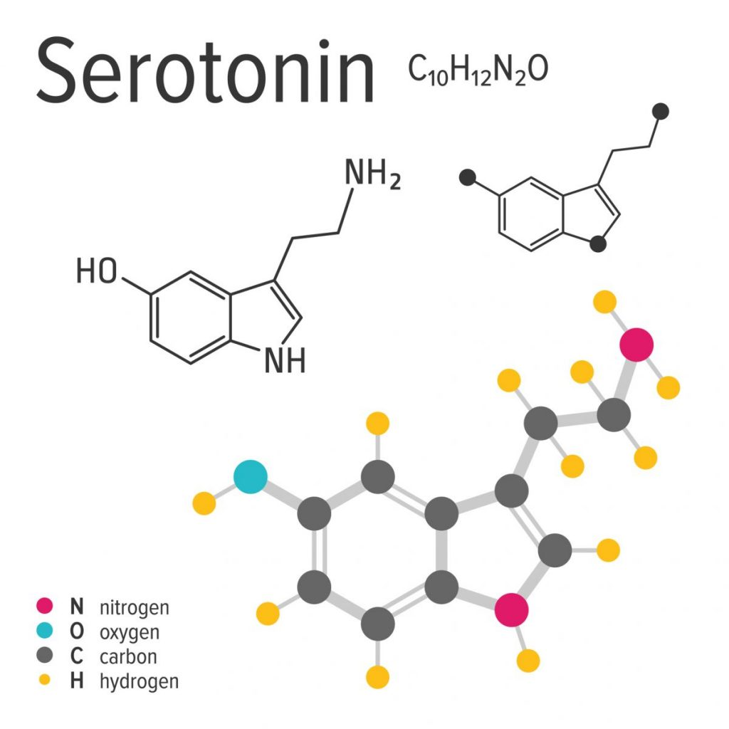 serotonin Neurotransmitters