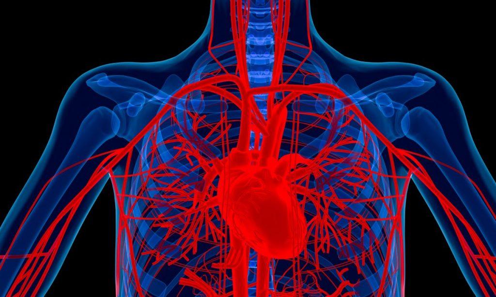 valves artery