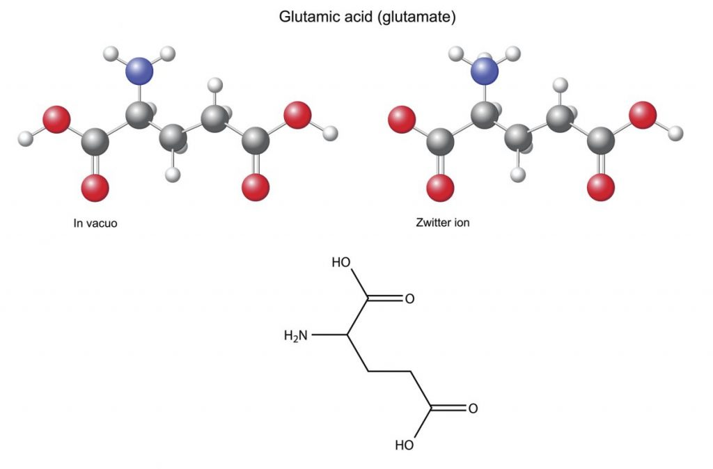 glutamic acid Neurotransmitters