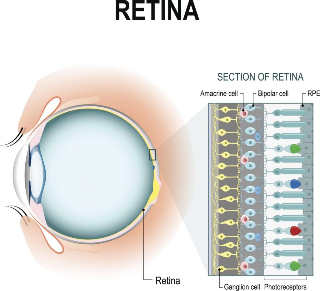retina color blindness