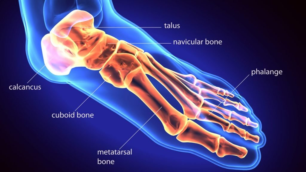 MTP bones