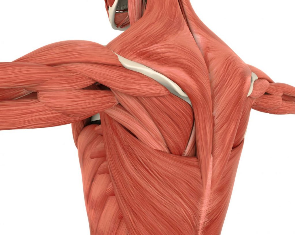 Myofascial pains