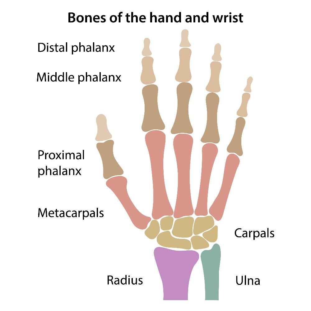 wrist arms