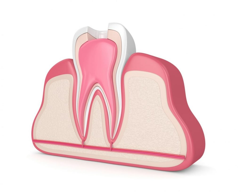 teeth tooth