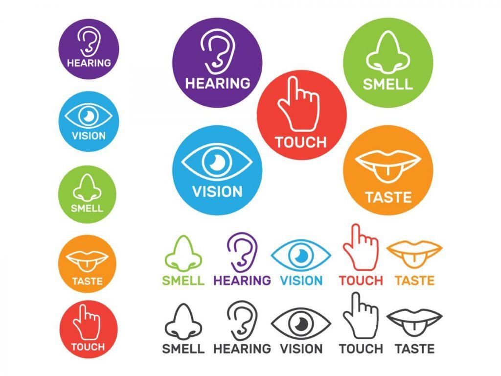 sensory brain