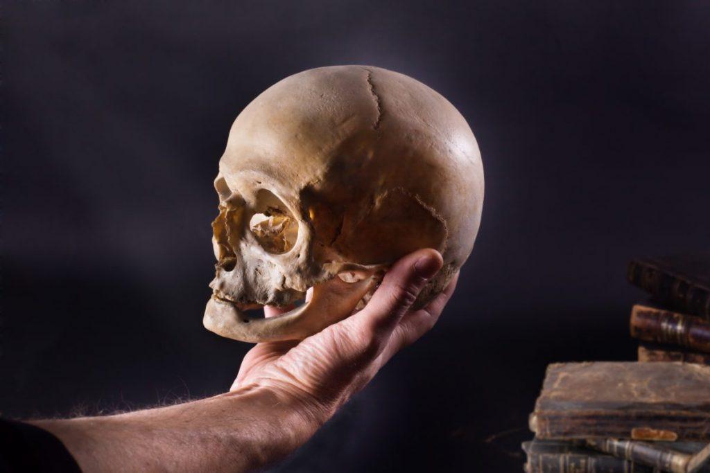 skull bones human skull