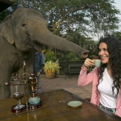 What's the Deal with Elephant Dung Coffee?