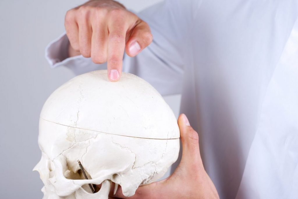 human skull bone