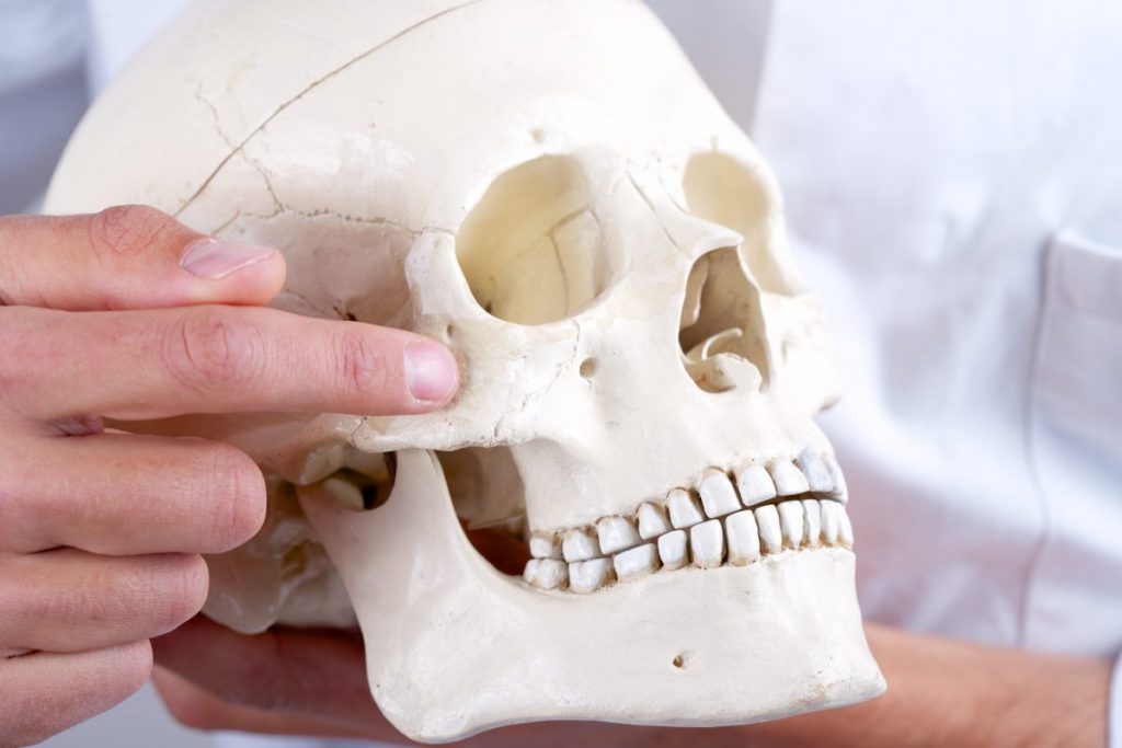 zygomatic human skull