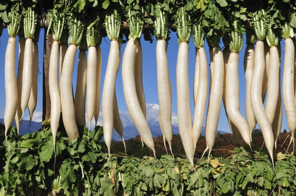 vegetables daikon