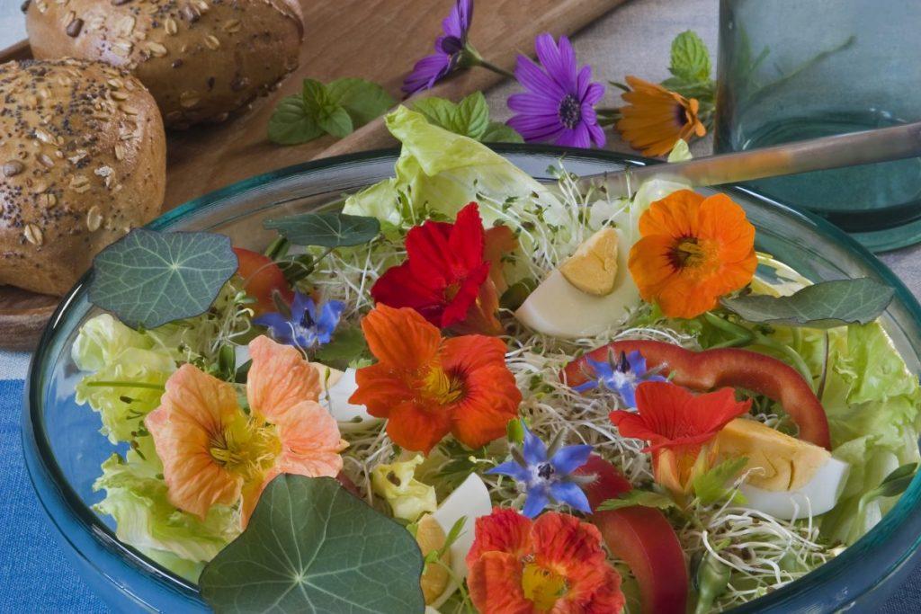 nasturtium salads