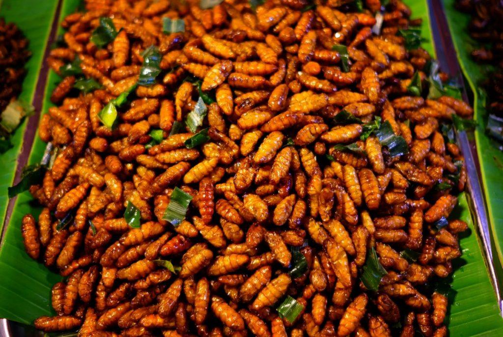malnutrition Entomophagy