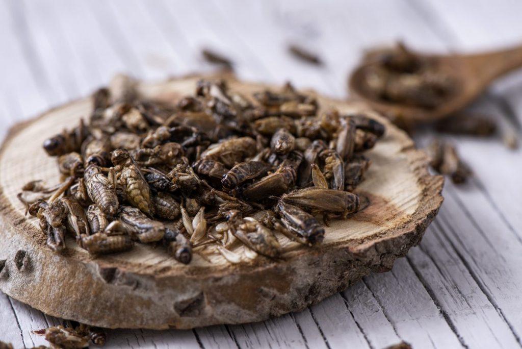 health benefits Entomophagy