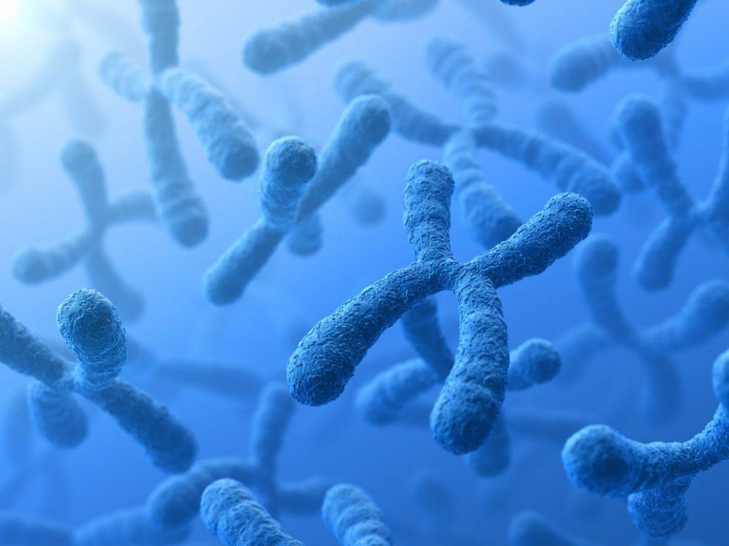 chromosome sex division