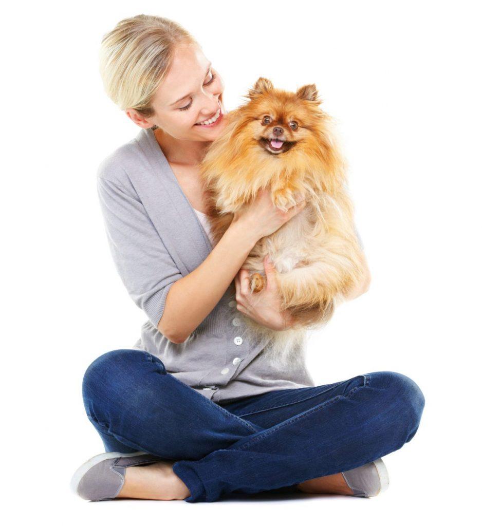 social dog breeds German Pomeranians