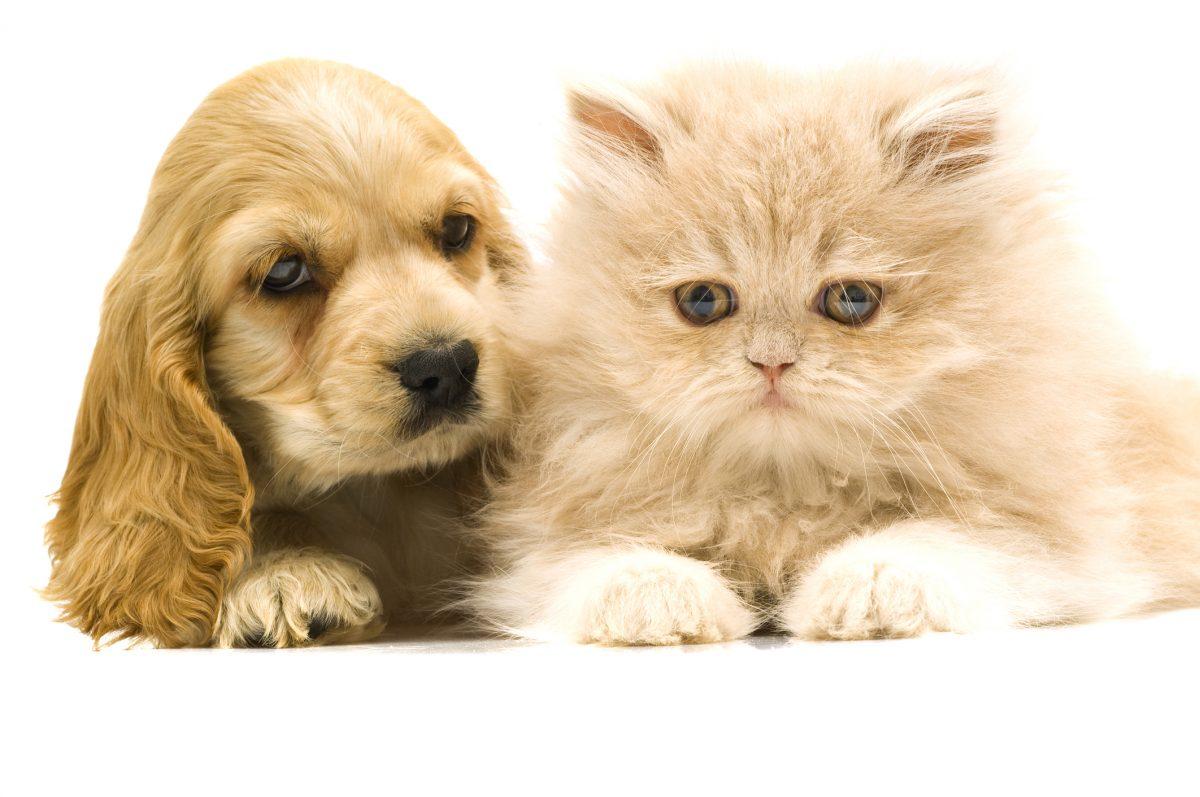 animals pet names