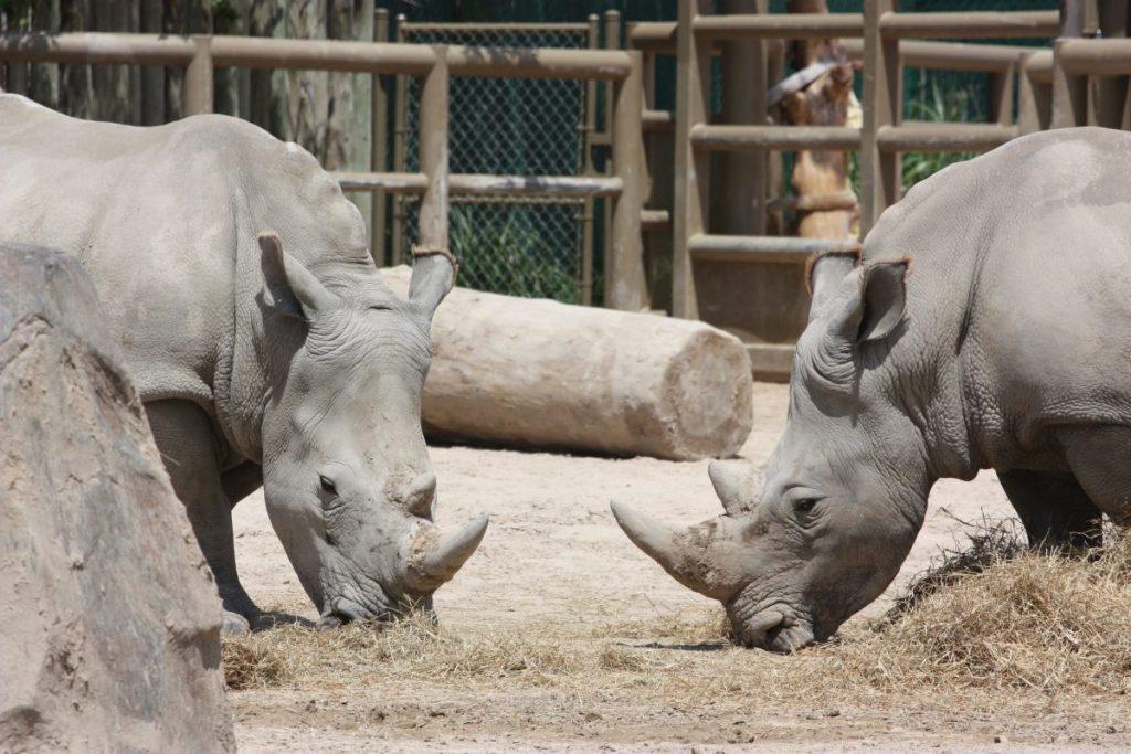 houston zoo kids