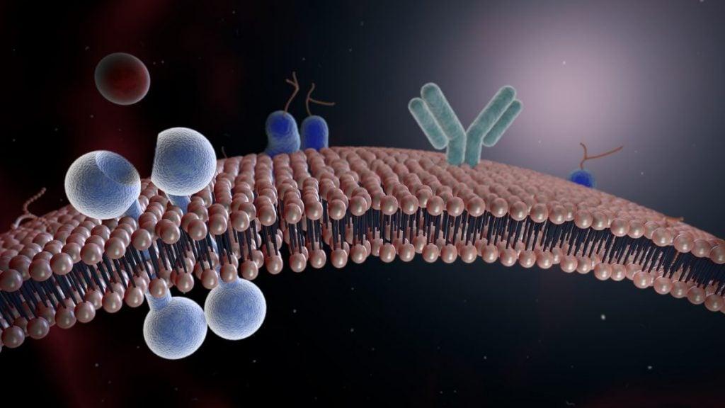 cell Mycobacterium tuberculosis