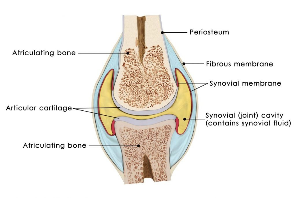 types of cartilage
