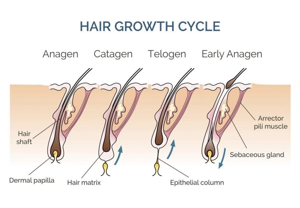 hair growth human hair