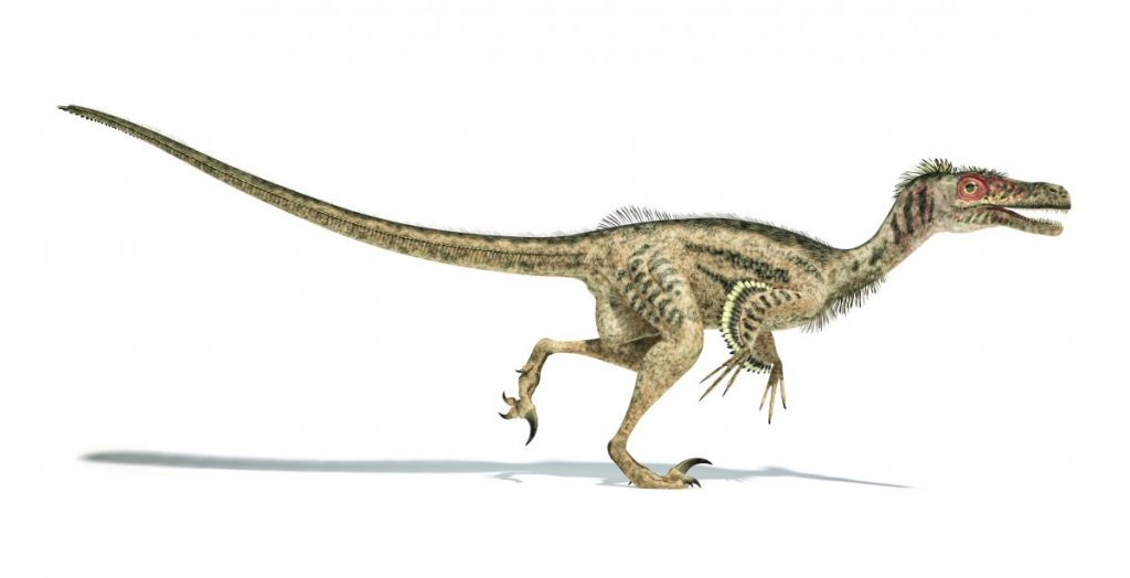 dinosaur velociraptors