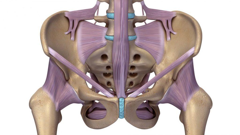 ligaments tailbone