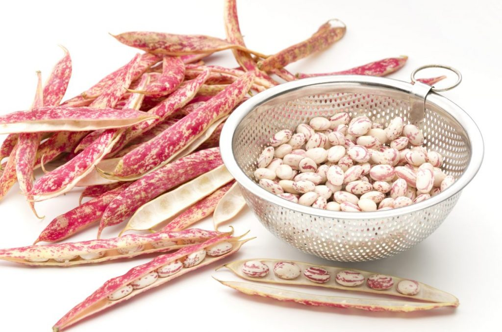 borlotti bean benefits