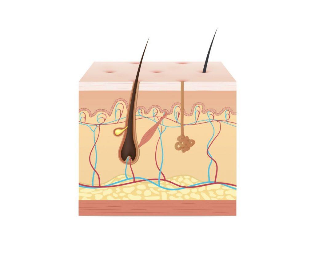 barrier keratin is