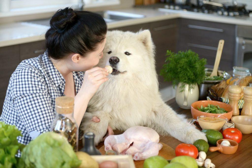 diet dogs