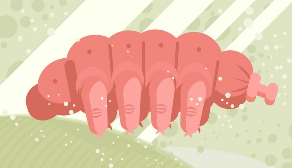 anatomy tardigrades