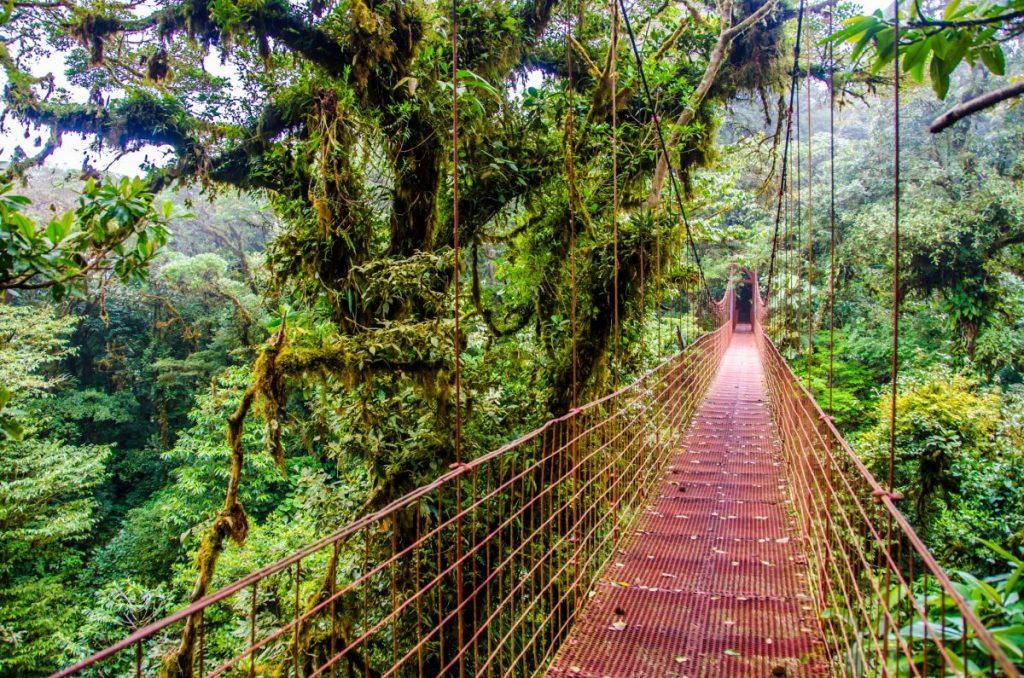 forest Costa Rica
