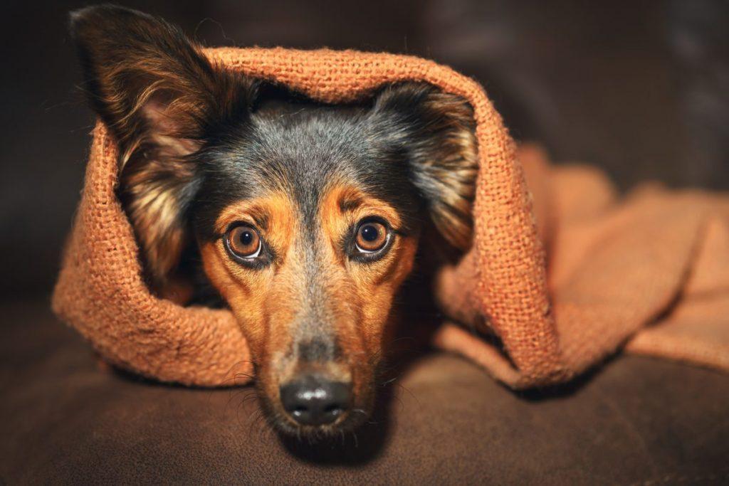 diarrhea mucus stress dog