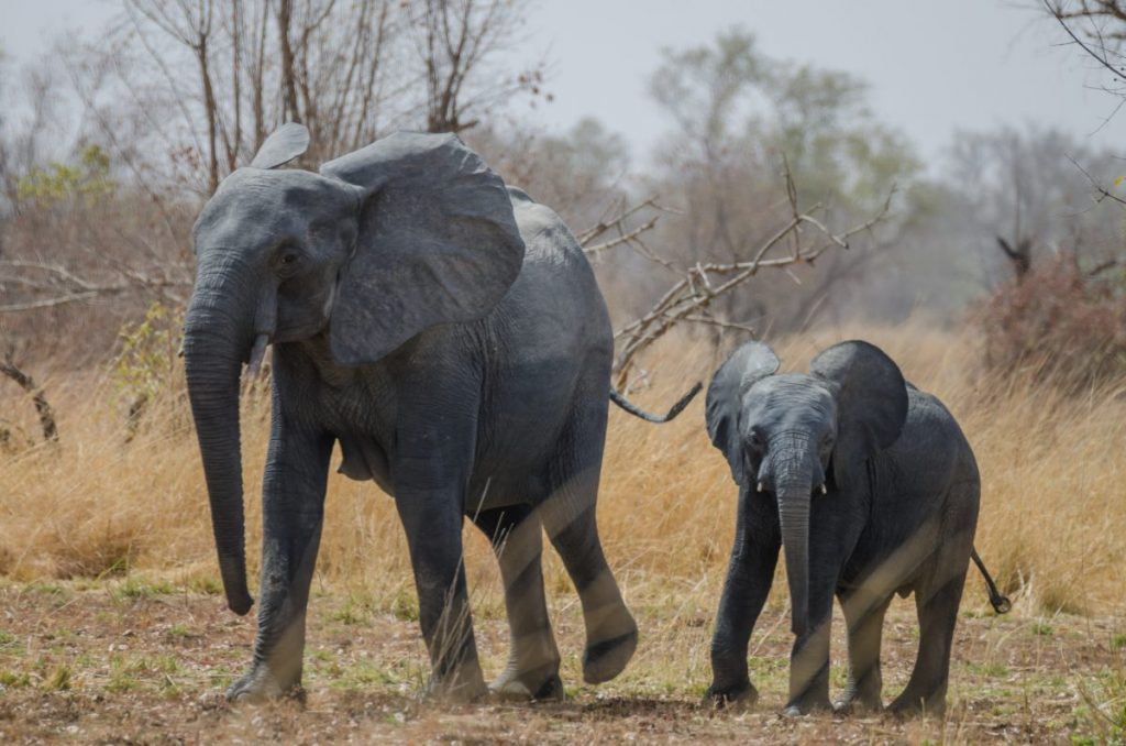 pendjari national park elephant benin