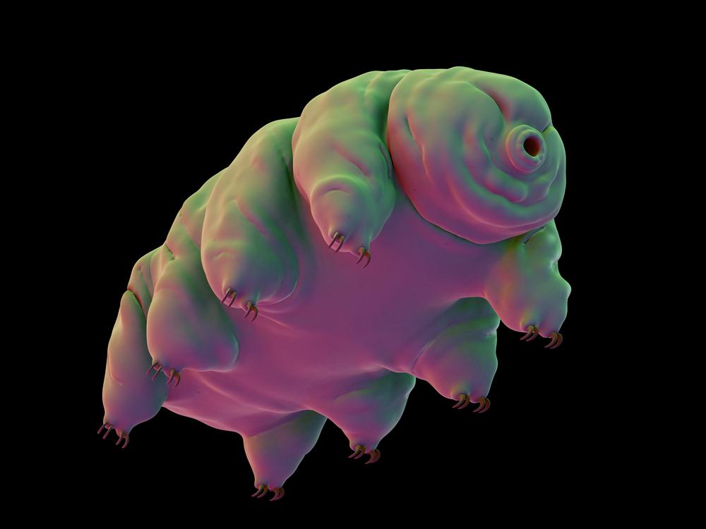 water bears tardigrades