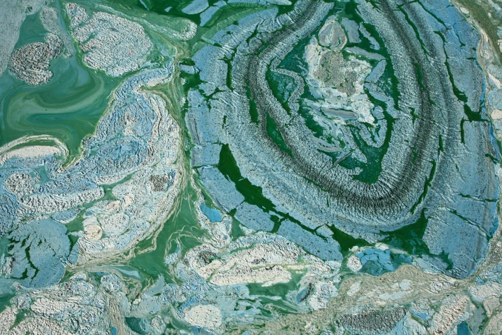 what blue-green algae