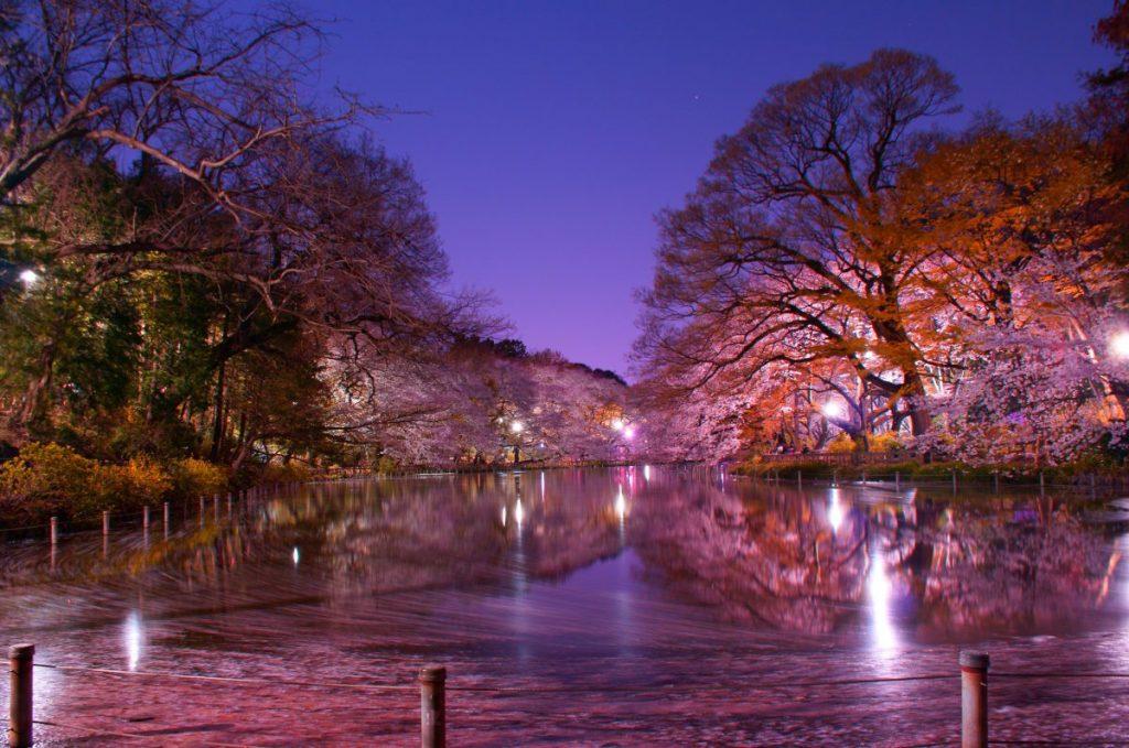 inokashira park kichijoji musashino